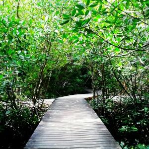 Jalan kayu di Mangrove Park