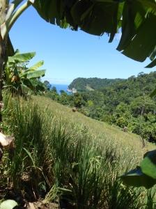 tanaman padi dengan kondisi tanah miring