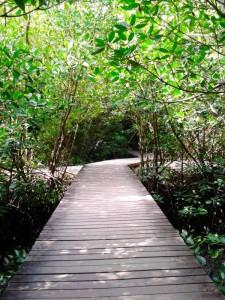 Mangrove Park Bali (2)