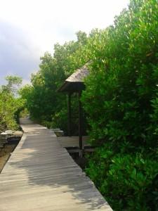 Mangrove Park Bali (3)