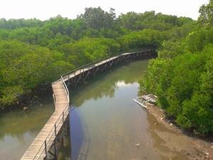 Track Mangrove Park dilihat dari salah satu tower