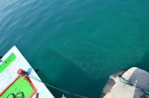 Yoh, di Pelabuhan banyak dijumpai ikan kecil kayak gini