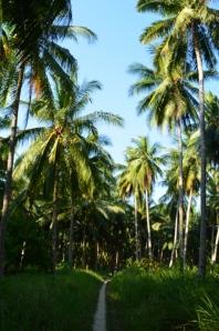 Banyaknya pohon kelapa disini, tentunya banyak degan seger :)