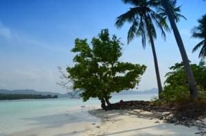 Pepohonan di Pulau Balak