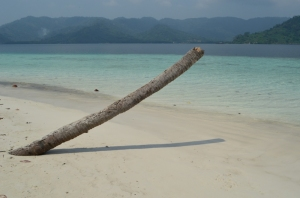Di pulau Balak pasti nemu pohon kelapa patah ini