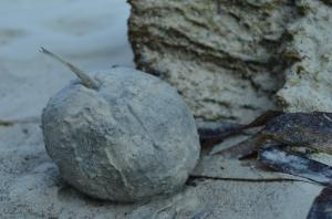 Setelah dipanah, si ikan dikubur kayak gini, duh :x