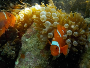 Nemo ini ngajak gelut kayaknya | Mas Bari shoot