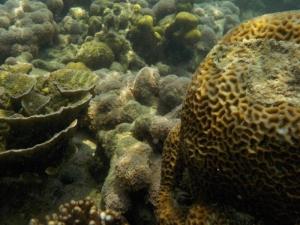 Ikan-ikannya pada gak mau narsis