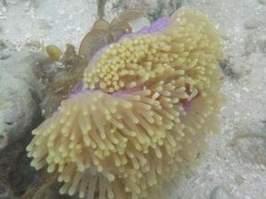 Nemo di dermaga banyak tapi pemalu semua, haha