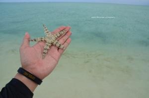 Salah satu bintang laut bawean