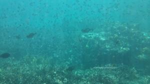 ikan yang kayak daun-daun berguguran :D