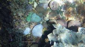 warna-warni karang