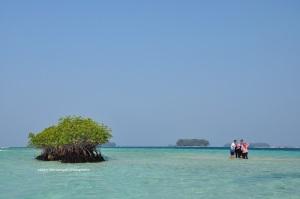 View pulau Dolphin lainnya