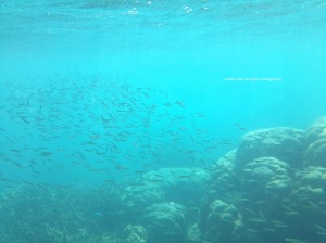 Disini juga banyak ikan kecil-kecil