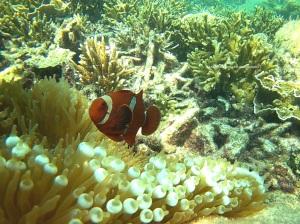Nemo lagi :)