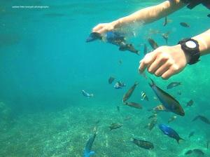 Ikan yang berseliweran di spot kedua