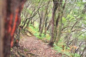 Hutan di sekitar KaPut